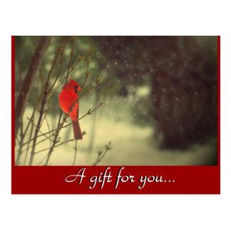 Cardinal Holiday Gift Certificate Postcard