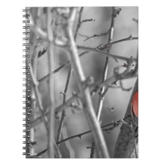 Cardinal in a tree notebooks