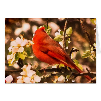 Cardinal in Apple Blossoms Card