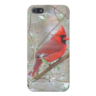Cardinal in bush iPhone 5 case