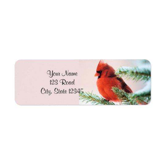 Cardinal in Snow Dusted Fir