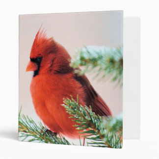 Cardinal in Snow Dusted Fir Binders