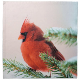 Cardinal in Snow Dusted Fir Napkin
