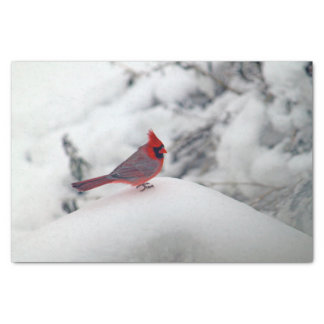 Cardinal in the Snow 6239 Tissue Paper