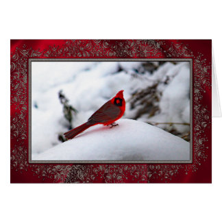 Cardinal in the Snow 6243 Christmas Card