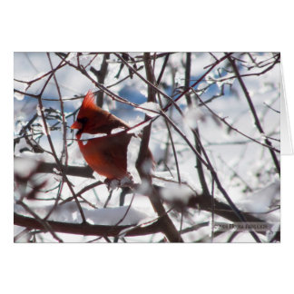 Cardinal in Winter Card