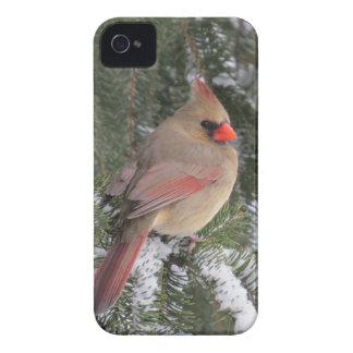 Cardinal iPhone 4 Case-Mate Case