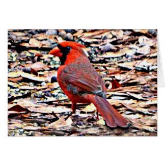 Cardinal (Male) Card