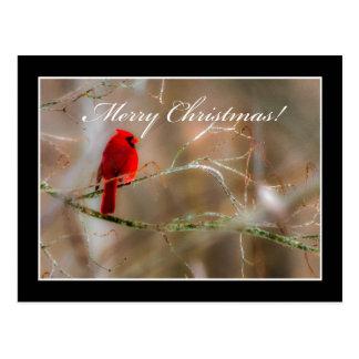 Cardinal Merry Christmas Postcard By Tom Minutolo