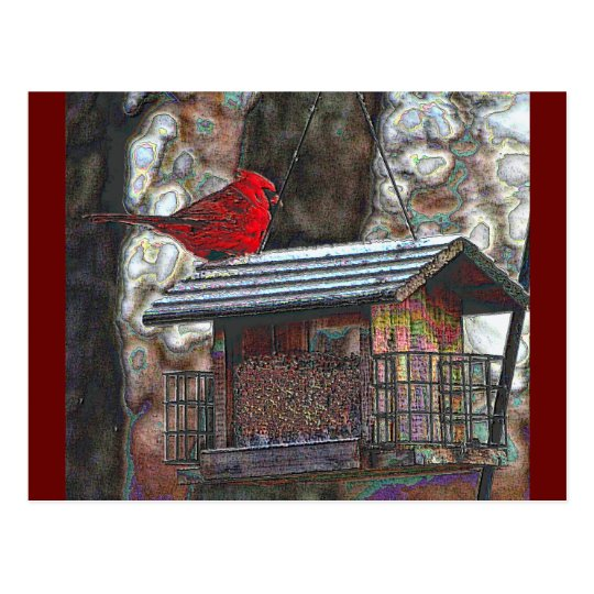 Cardinal on a Birdfeeder Postcard