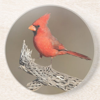 Cardinal on a cholla rib coaster