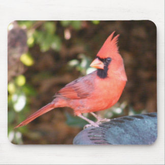 Cardinal on Bird Bath Mouse Pad