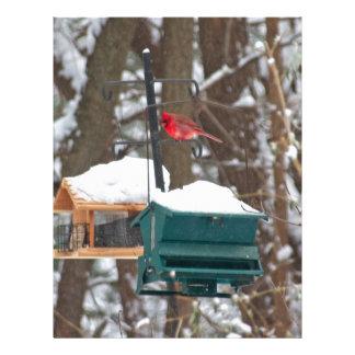 Cardinal on Birdfeeder Letterhead