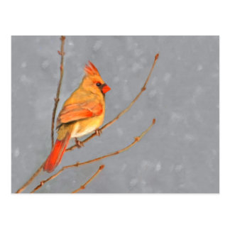 Cardinal on Branch Postcard