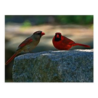 cardinal pair  Old Lynchburg City Cemetery Postcard
