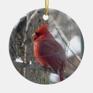 Cardinal photograph-(bird) Christmas Ornament