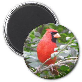 Cardinal Portrait Magnet