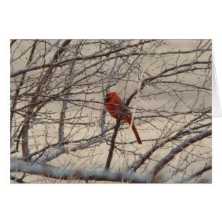 Cardinal/Robin, Joyful Song Card