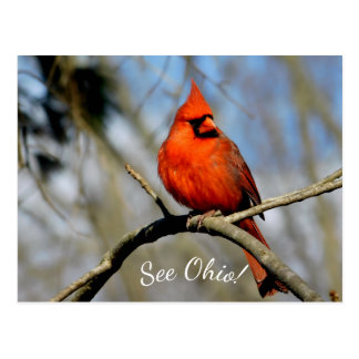 Cardinal (See Ohio) Postcard