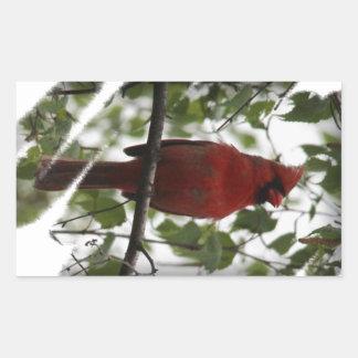 Cardinal Swerl