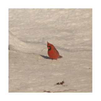 Cardinal, Wood Photo Print. Wood Wall Decor
