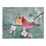 CARDINALS & APPLE BLOSSOMS by SHARON SHARPE Post Cards