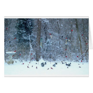 Cardinal's in the Snow Greeting Card