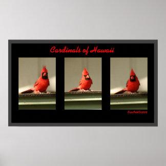 Cardinals Of Hawaii Poster