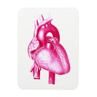 Cardiology Pop Art: Pink Human Heart Anatomy Magnet