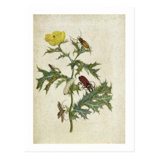 Cardos Spinosus: Beetles and Caterpillars, plate 6 Postcard