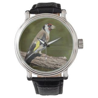 Carduelis carduelis wristwatch