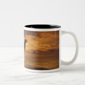 Caribbean, Bottlenose dolphins Tursiops 16 Two-Tone Coffee Mug