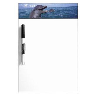 Caribbean, Bottlenose dolphins Tursiops 5 Dry-Erase Board