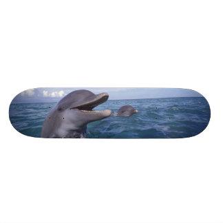 Caribbean, Bottlenose dolphins Tursiops 5 Custom Skateboard