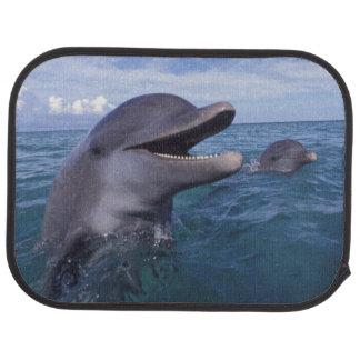 Caribbean, Bottlenose dolphins Tursiops 5 Floor Mat