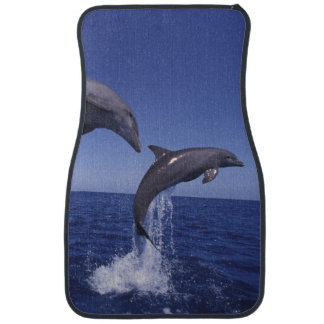 Caribbean, Bottlenose dolphins Tursiops 7 Auto Mat