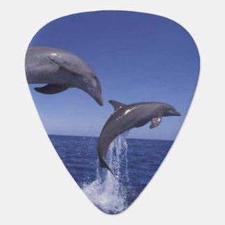Caribbean, Bottlenose dolphins Tursiops 7 Guitar Pick