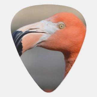 Caribbean Flamingo Pick