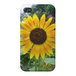 Caribbean Golden Sun Flower iPhone 4/4S Case