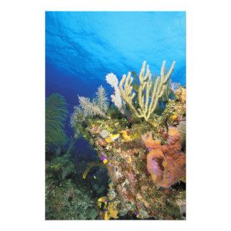 Caribbean. Reef. Photo