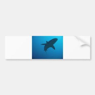 Caribbean Reef Shark Bumper Stickers