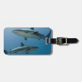 Caribbean Reef Shark Luggage Tag