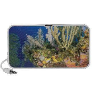 Caribbean. Reef. Travel Speakers