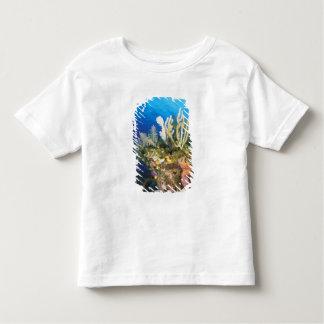 Caribbean. Reef. T Shirt