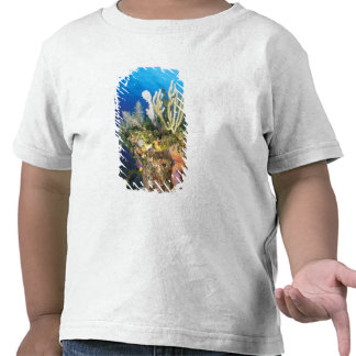 Caribbean. Reef. Tshirt