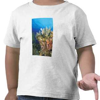 Caribbean. Reef. Tee Shirts