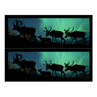 Caribou and Northern Lights Postcard