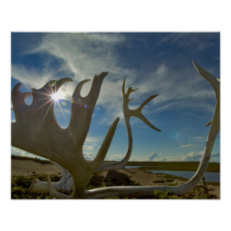Caribou antlers on the sandy ground in the poster