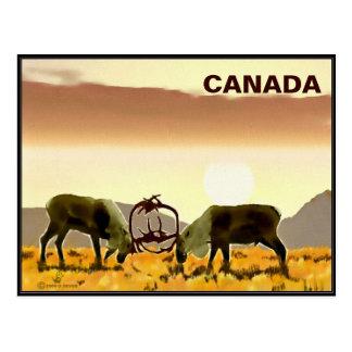 Caribou Duel - Canada Postcard