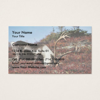 Caribou feeding business card